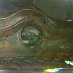 testa serpente